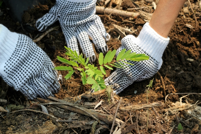 Reforestation Efforts in the Amazon Aims To Plant 73 Million Trees