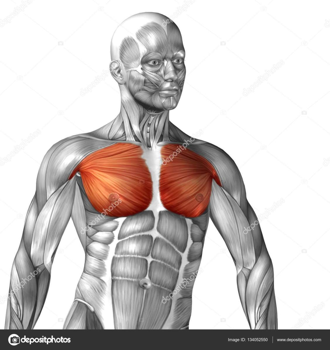 The Best Chest Workouts To Maximize Your Muscles