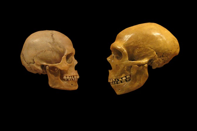 Bones of a Neanderthal Child Discovered In Poland
