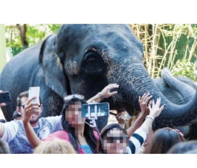 Exotic Animal Selfie Outbreak