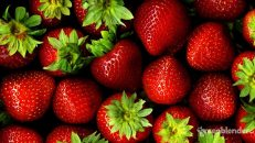 smoothies-with-strawberries-by-Green-Blender-960x540