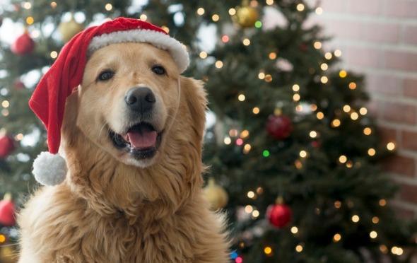 5 Christmas Gifts for Your Dog
